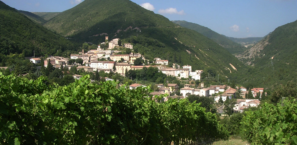 Cooking classes with excursions on the vineyards in Marche Italy
